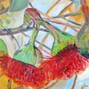 Eucalyptus Flowers Art Print