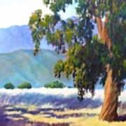 Eucalyptus On The Bluffs Art Print