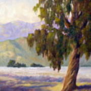 Eucalyptus Sentinel Art Print