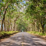 Eucalyptus Tree Tunnel - Kauai Hawaii Art Print