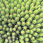 Euphorbia Art Print