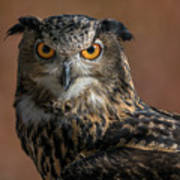 Eurasian Eagle Owl Iv Art Print