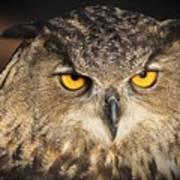 Eurasian Eagle Owl Portrait Art Print