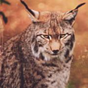 Eurasian Lynx Art Print
