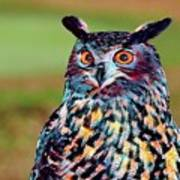 European Eagle Owl Art Print