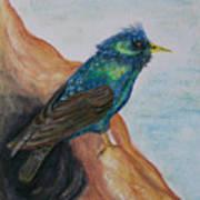 European Starling Art Print