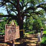 Evangeline Oak St Martinville Louisiana Art Print