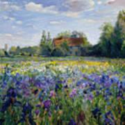 Evening At The Iris Field Art Print