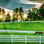 Evening Graze In Tennessee Art Print