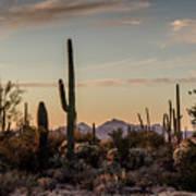 Evening In The Desert Art Print