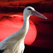 Evening Stork  Art Print