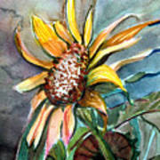 Evening Sun Flower Art Print