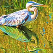 Everglades Blue Heron Art Print
