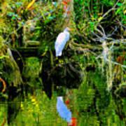 Everglades Egret Art Print