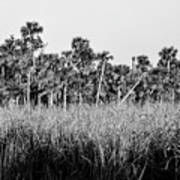 Everglades Grasses And Palm Trees 2 Art Print