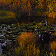 Everglades Pond Art Print