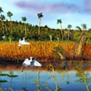Everglades Sanctuary Art Print
