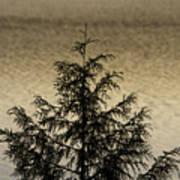 Evergreen Lake Art Print