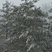 Evergreen Snowfall Art Print