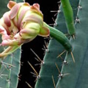 Every Cactus Flower Has It's Thorns  Art Print