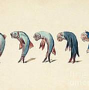 Evolution Of Fish Into Old Man, C. 1870 Art Print