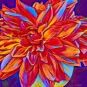 Exciting Red Dahlia Art Print