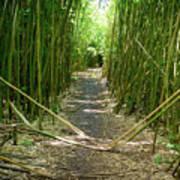 Exlporing Maui's Bamboo Art Print