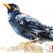 Myna Bird From Thailand Art Print