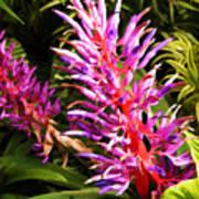 Exotic Flora Art Print