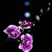 Exotic Orchid 6 V2 Art Print
