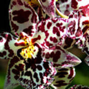Exotic Orchids Of C Ribet Art Print
