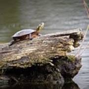 Exploring Turtle Art Print