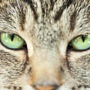 Extreme Close Up Tabby Cat Art Print