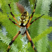 Extruded Spider Art Print