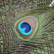 Eye  2 Art Print
