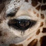 Eye Of The Giraffe Art Print