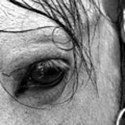 Eye Of  The Stallion Art Print