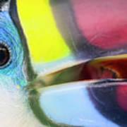 Eye Of The Toucan  Art Print