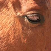 Eyelashes - Horse Close Up Art Print