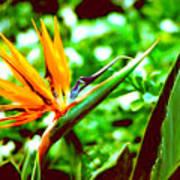 F21 Bird Of Paradise Flower Art Print
