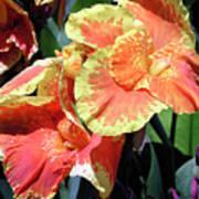 F24 Cannas Flower Art Print