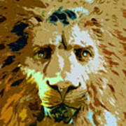 Face Of The Lion Art Print