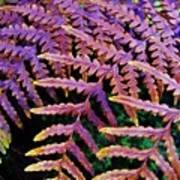 Faded Ferns Art Print