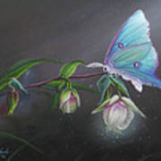 Fairy Lantern's Glow Art Print