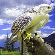 Falcon Being Trained H A Art Print