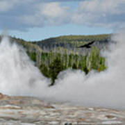 Falcon Over Old Faithful - Geyser Yellowstone National Park Wy Usa Art Print