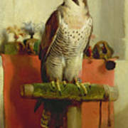 Falcon Art Print by Sir Edwin Landseer
