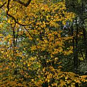 Fall 2010 12 Art Print