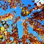 Fall Apricot Leaves Art Print
