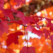 Fall Art Red Autumn Leaves Orange Fall Trees Baslee Troutman Art Print